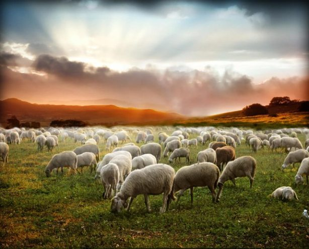 In-Sheeps-Cothing-Background
